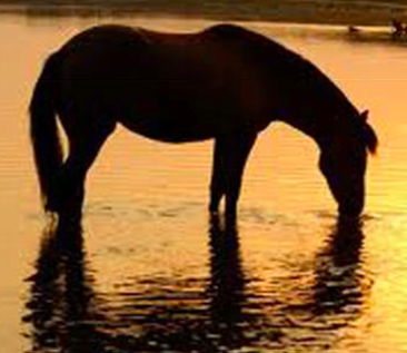 take a horse to water